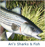Ari's Shark & Fish