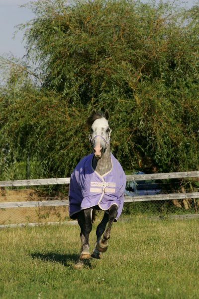 Amigo Summer Turnout Purple / Alabaster